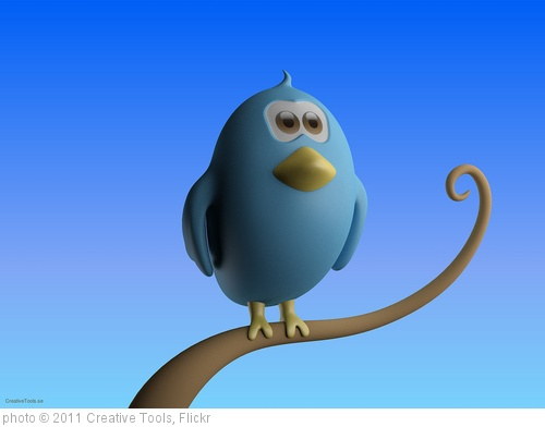 'CreativeTools.se - Twitter bird standing on branch - Close-up' photo (c) 2011, Creative Tools - license: http://creativecommons.org/licenses/by/2.0/