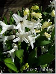Fleurs jardin13 - Copie