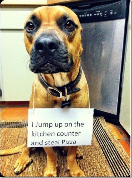 dog-shaming-bad-2
