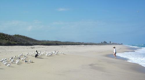 Thursday beach PM 023