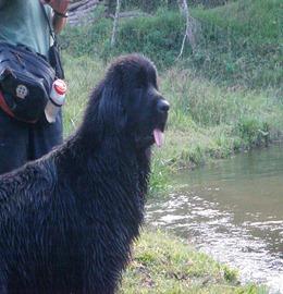 Dogs Trekking 4 (200)
