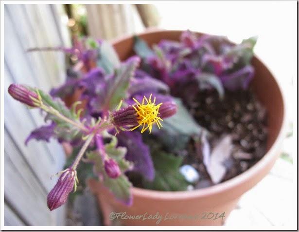 05-14-purple-velvet