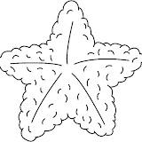 STARFISH1_BW_thumb.jpg