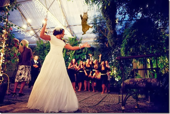 cat-toss-weddings-6