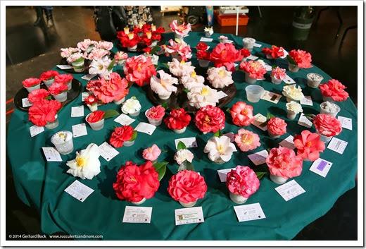 140302_Camellia_Society_Sacto_Show_006