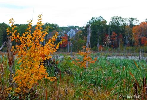 2. autumn bog-kab