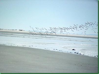 Ocean front walk 104