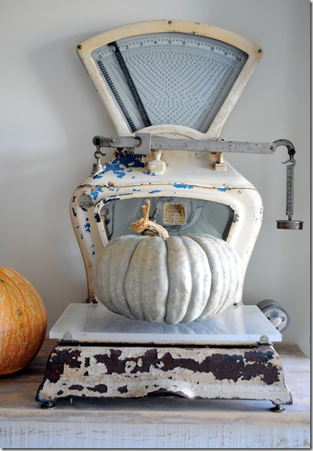 scale with pumpkins