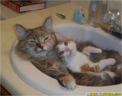 Cats Will Sleep Anywhere 30