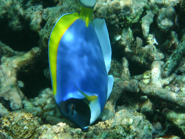 seychelles8_20070412_1768968923.jpg