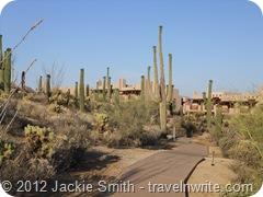 Arizona Spring 2012 149