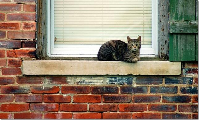 outside the window cat