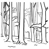 Bosque-1.jpg