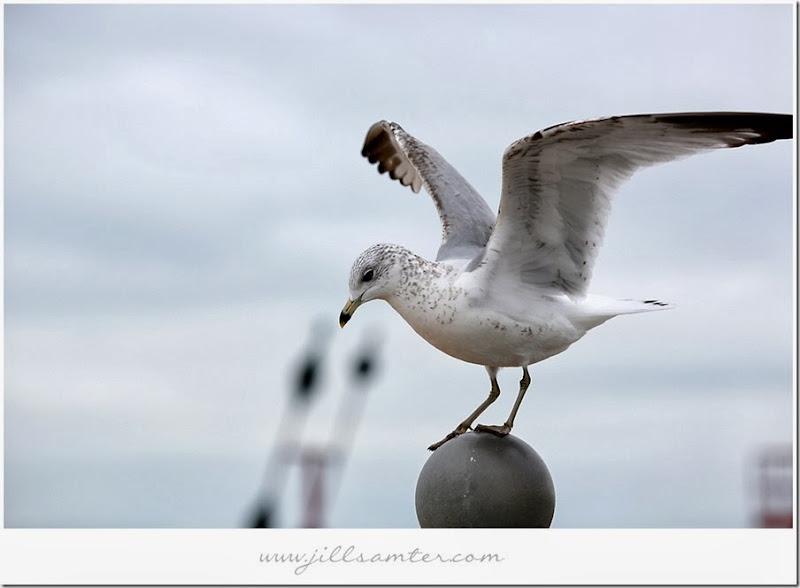 birdstand2