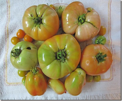 Jet Star and Roma tomatoes