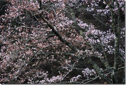 Nikon_2010-04-06_005_01