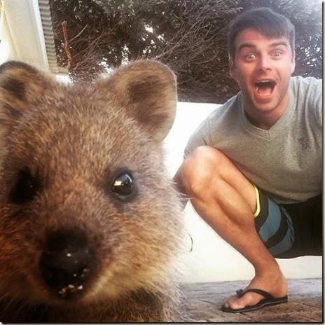 selfies-australian-quokka-023