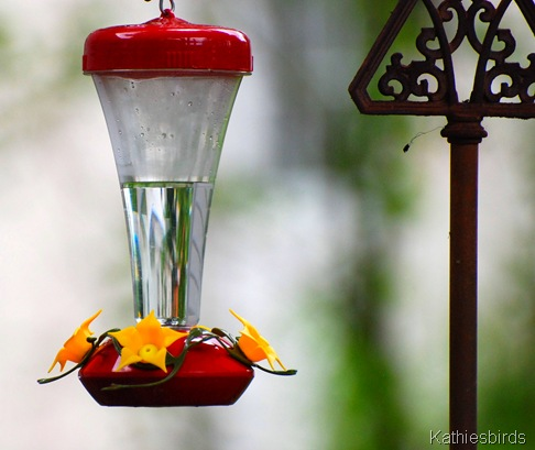 3. hummingbird feeder-kab