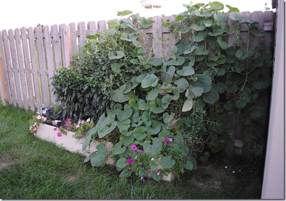 Garden Sept 5 (7)
