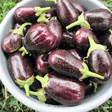 Oogst aubergines