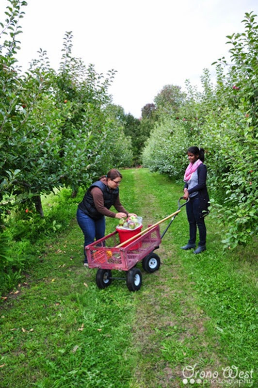 apple_picking2LROW