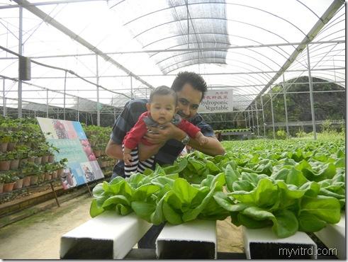 Green View Garden 12