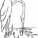 crane-1-coloring-page.jpg