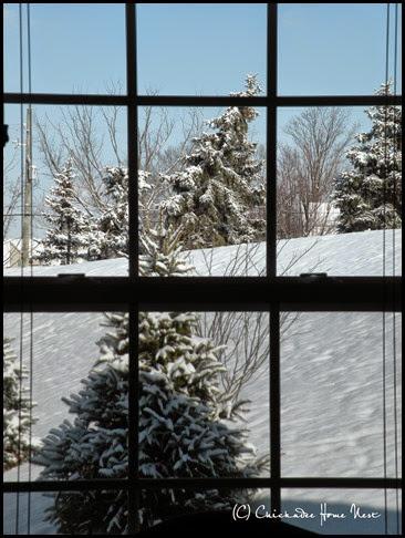Snow, Winter Wonderland (45)