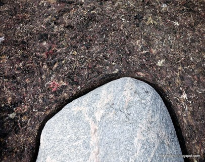 stone in kelp felt