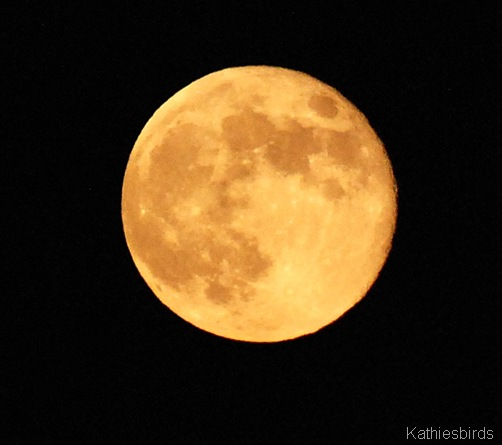 10. full moon-kab