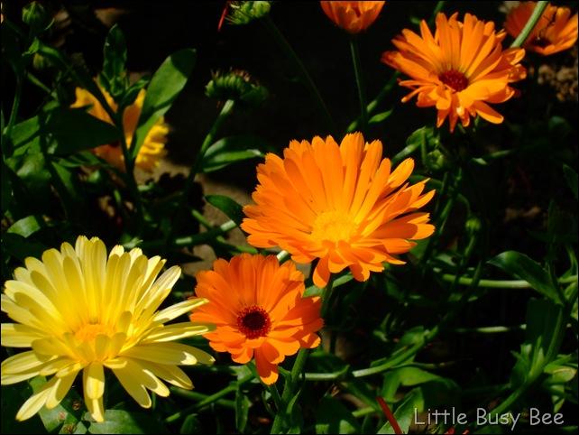 2012_0726photosblog0023