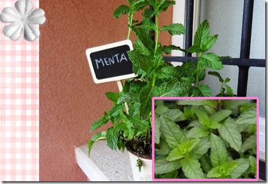 plantas aromaticas (page 2)