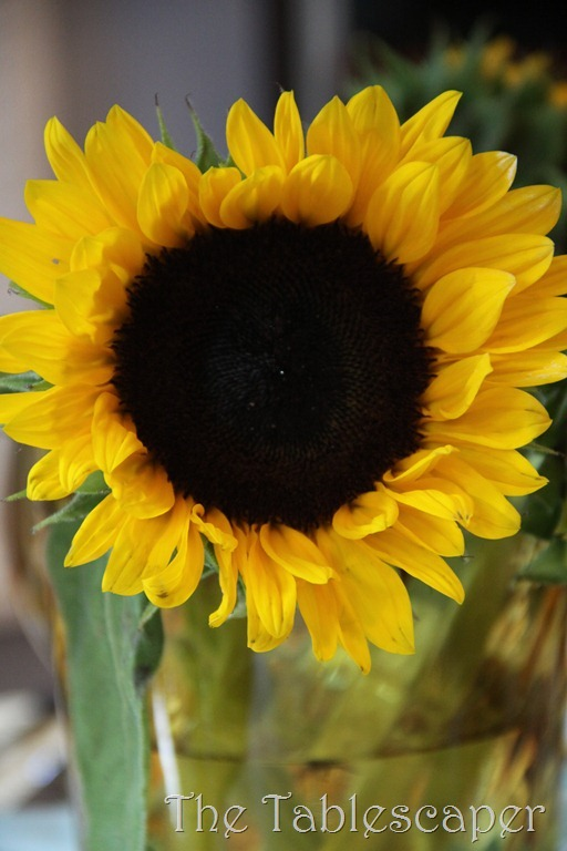 sunflowers 040