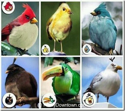 real-angry-birds