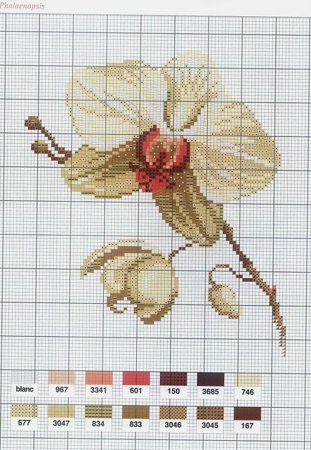 [flor-ponto-cruz-grafico-orquideas%255B2%255D.jpg]