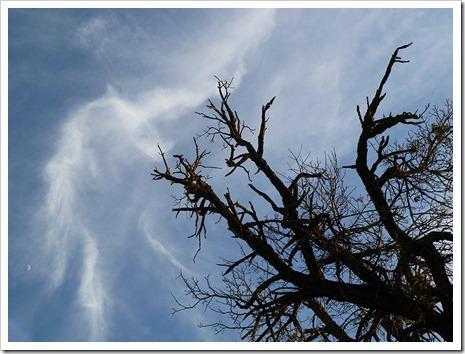 111231_tree_silhouette_6