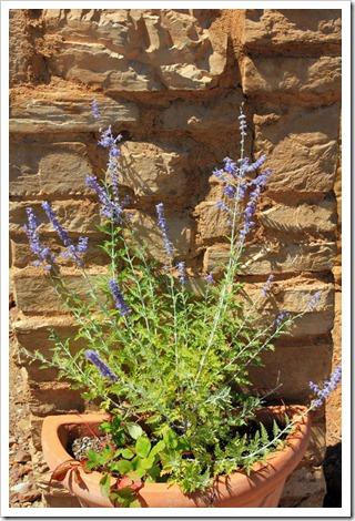 120720_mt_shasta_lavender_farm_051
