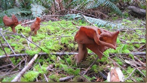 mushroom_013