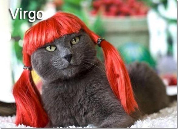 cats-signs-zodiac-2