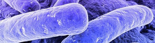 bactérias biomedicina