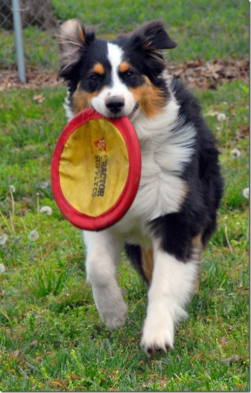 frisbee5537