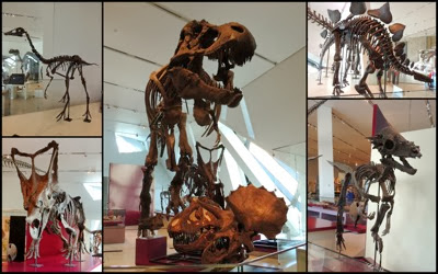 Tyranasarus rex collage