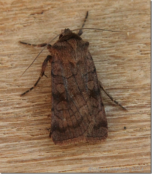 6-striped-rustic