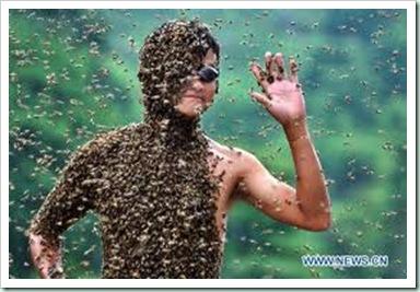 bees china