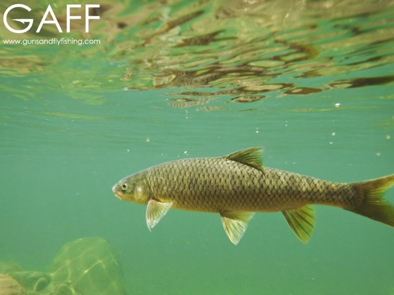 lesotho-yellowfish-flyfishing-trout (10).jpg