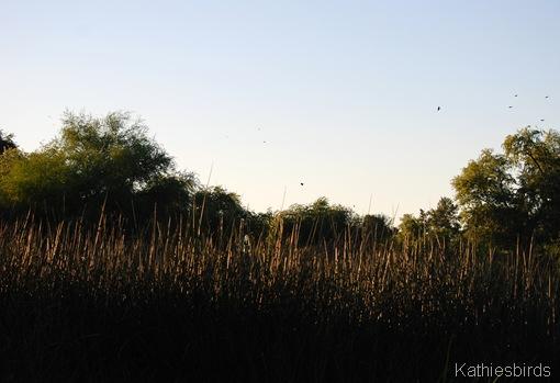 9. grasses-kab