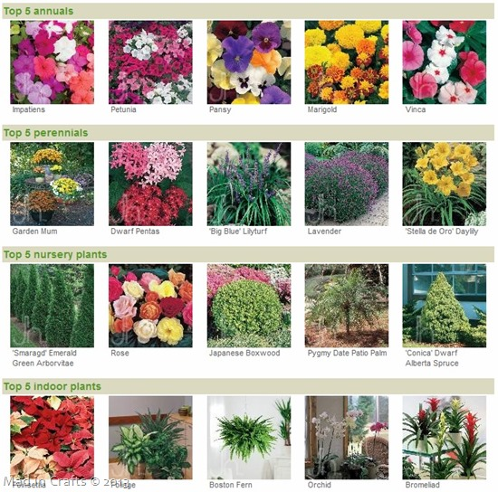 top plants - Home Depot Garden City