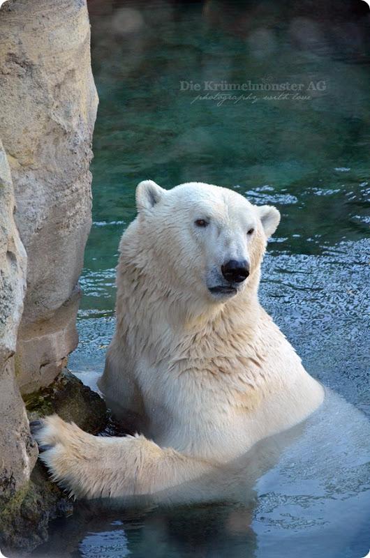 Nordseeliebe - Zoo am Meer Bremerhaven