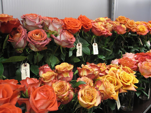 I love the colors of these roses. There are hundreds of varieties of roses at A Rose By Harvest in New York City.