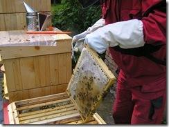 včelky a med květen 077